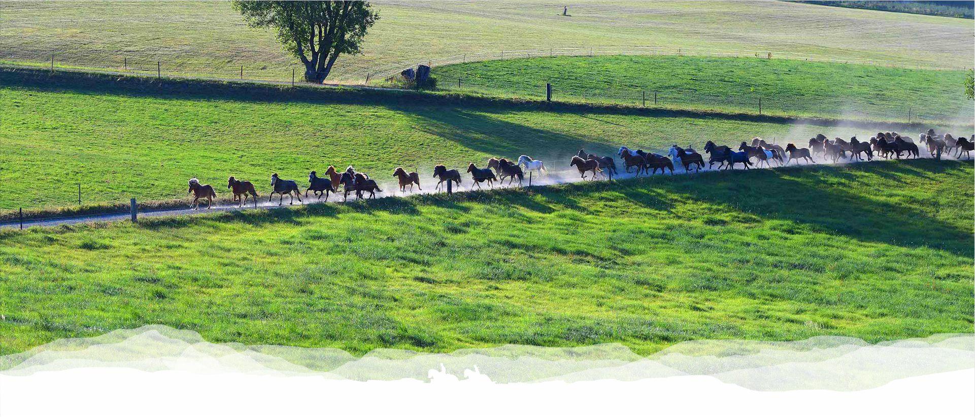 reitschule_berger_pensionspferde_002