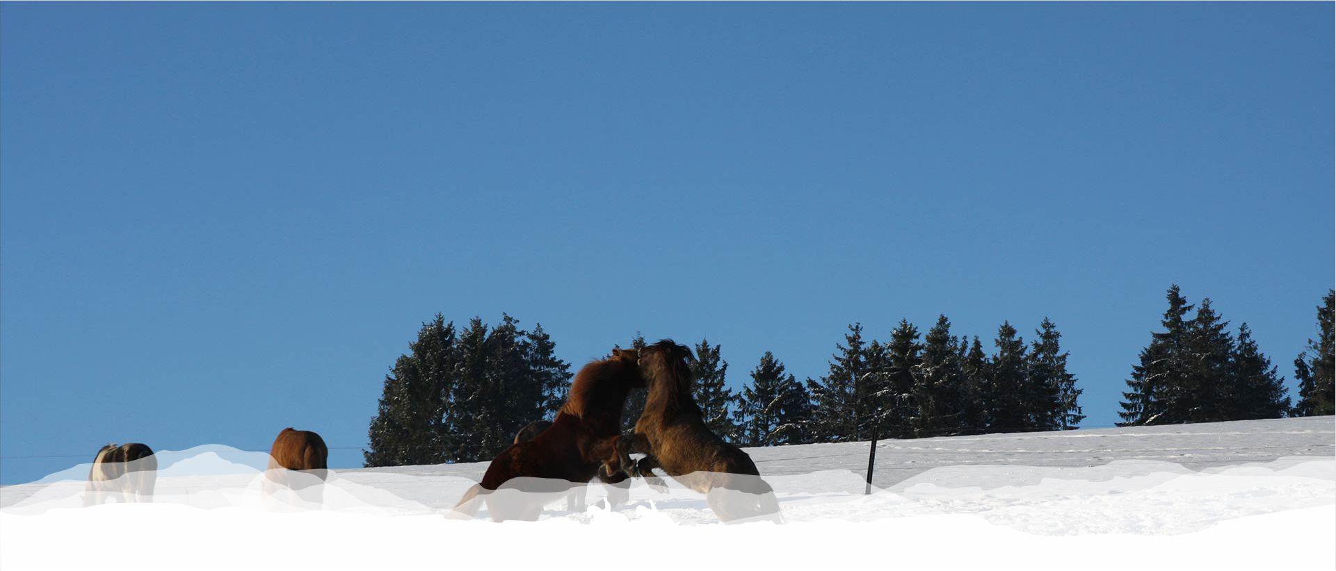reitschule_berger_pensionspferde_003